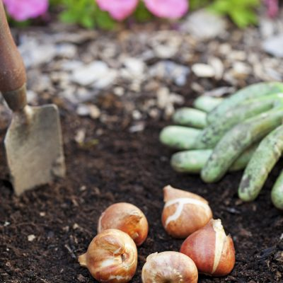 Landscaping Tips on a Budget
