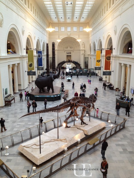 The Field Museum of Chicago (1 of 1)