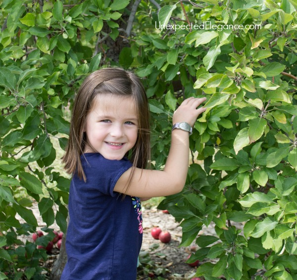 Apple Picking in the FALL-1-2