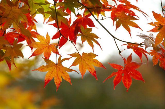 fall-leaves-3