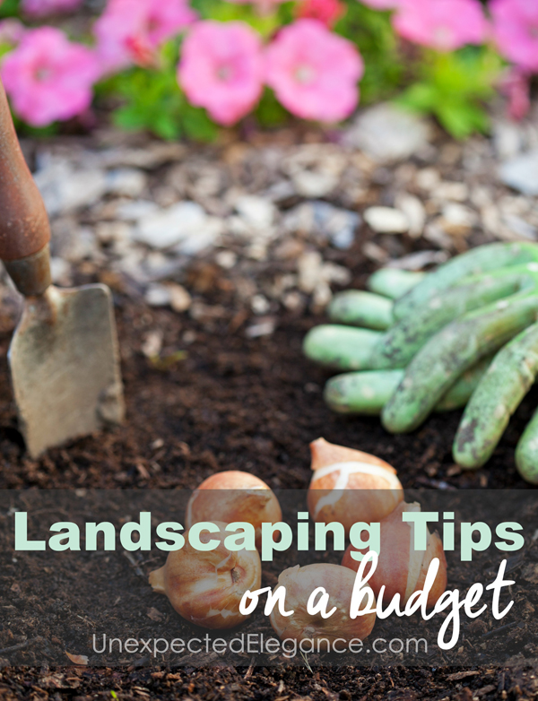 There are so many ways to get the yard you've dreamed of without spending a fortune. Here are just five tips for landscaping on a budget!